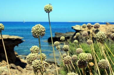 Menorca 23
