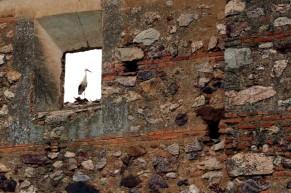 Castillo de la Puebla de Alcocer 18
